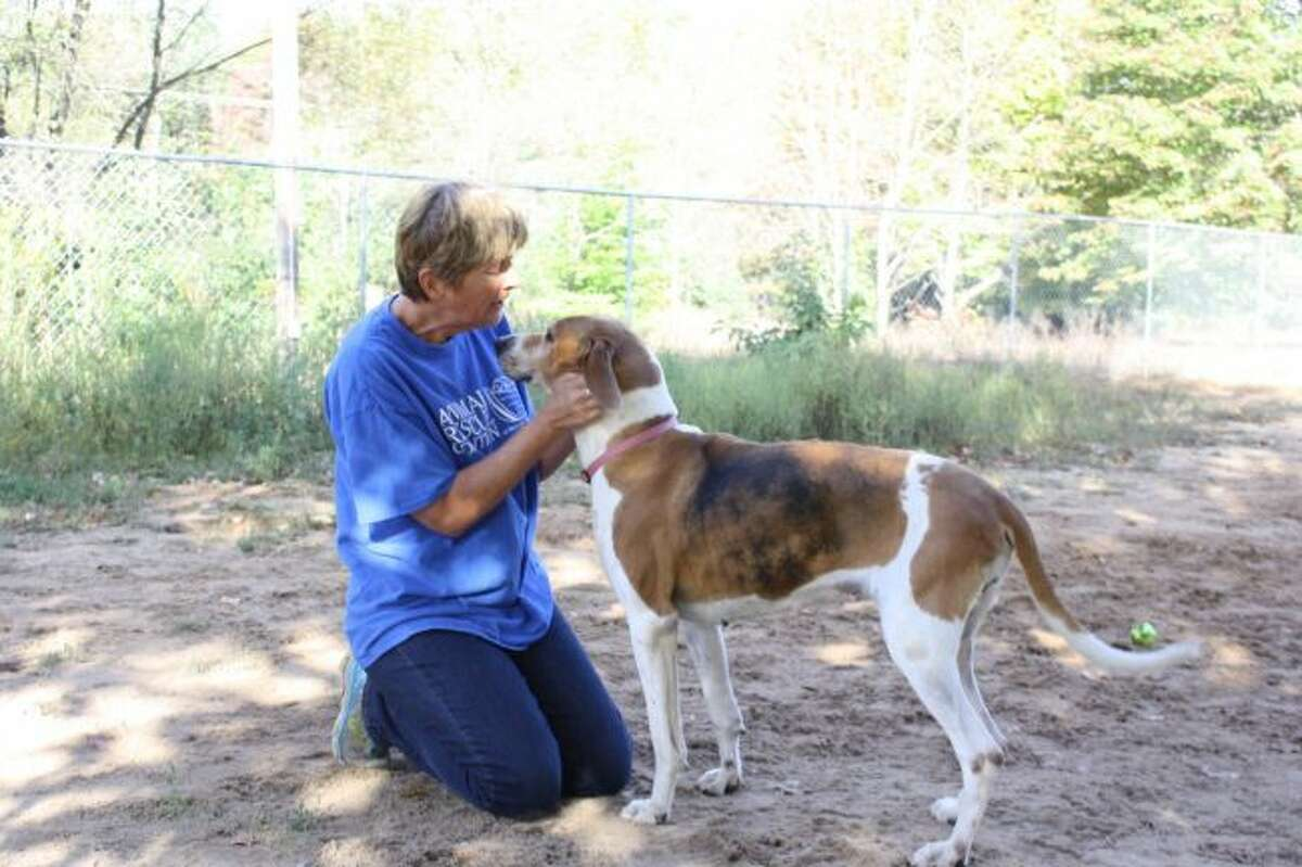 Animal Rescue Coalition of Mecosta County Director Cate Arroe plays with one of the dogs available for adoption. Sunday marked the organization's fifth anniversary. (Pioneer photo/Candy Allan)