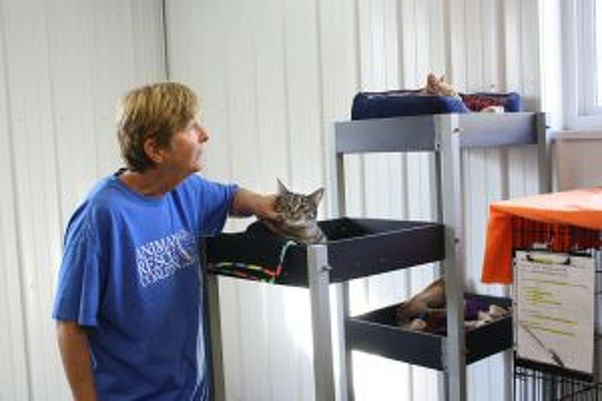Animal Rescue Coalition of Mecosta County Director Cate Arroe pets one cat while talking to another in the cat room at the shelter. Sunday marked the organization's fifth anniversary. (Pioneer photo/Candy Allan)