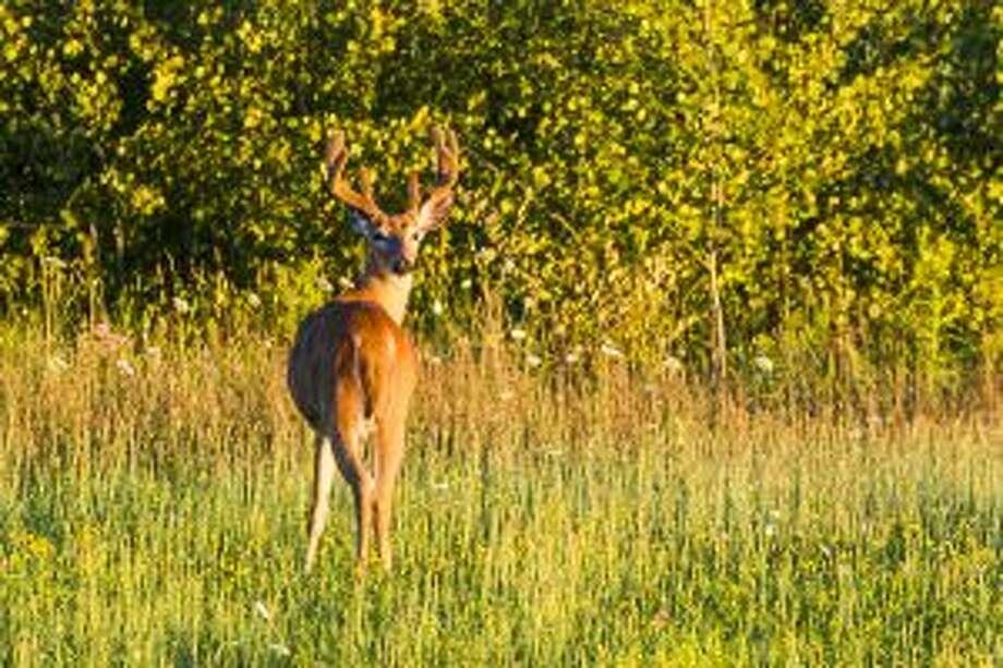 Deer hunters will be pursuing the big buck this season.
