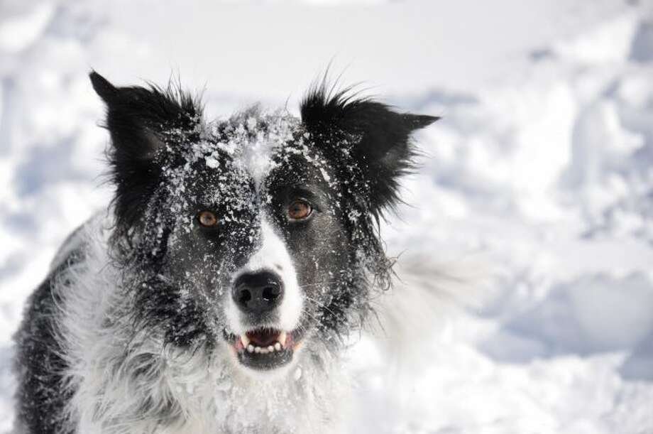 Pet owners are encouraged to bring their dogs and cats inside during spells of bitter cold temperatures throughout the winter. (Courtesy photo/Getty Images)
