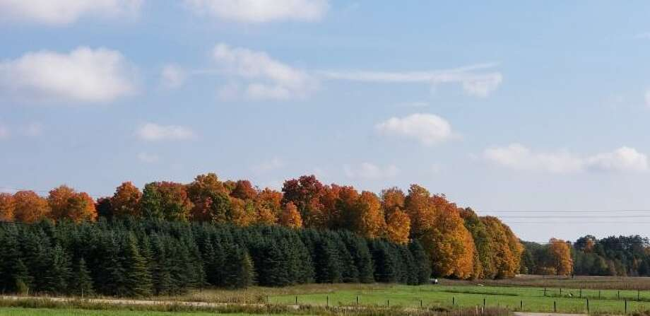 Throughout Mecosta and Osceola counties, autumn colors are showing in the trees. Between fields near Hersey, a red, orange and golden wooden area stands out against evergreen trees. (Pioneer photos/Meghan Gunther-Haas)