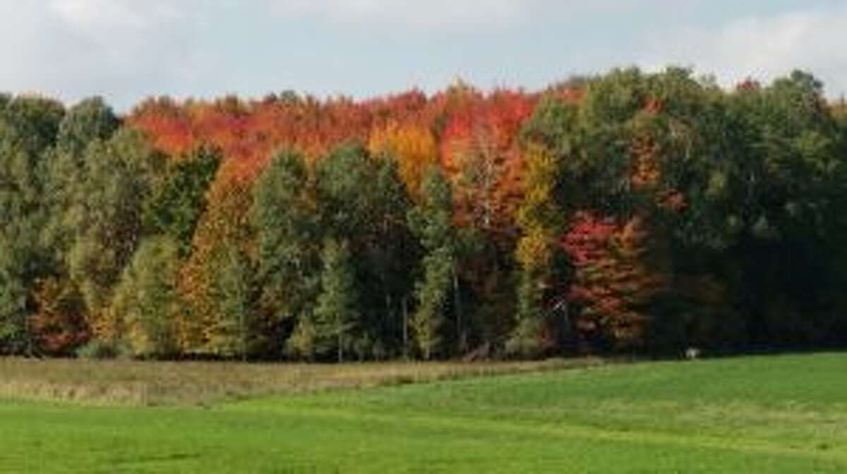 Rick Lucas, a forester with the Mecosta and Osceola-Lake conservation districts, said leaves are covered in a pigment known as chlorophyll, which absorbs light to produce energy for trees and gives leaves their green color.
