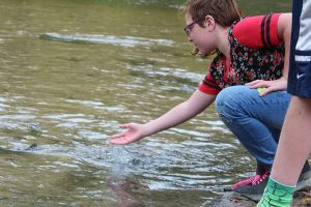 Zariah Kleczynski helps get some straggling rainbow trout into the Muskegon River on Friday afternoon. The students currently are raising salmon in Darin Hooker's sixth-grade science class, and will release those into the river in May.