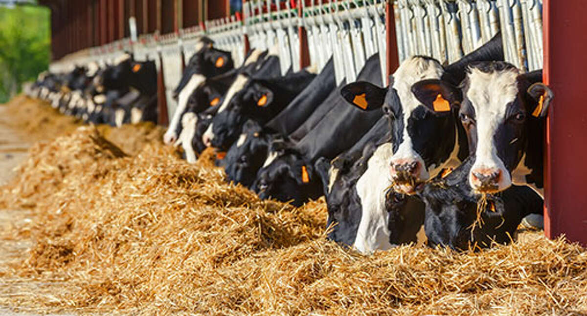 The dairy industry in the state of Michigan is facing a major challenge, as a statewide surplus and lack of processors hinder profits for dairy farmers. (Courtesy photo)