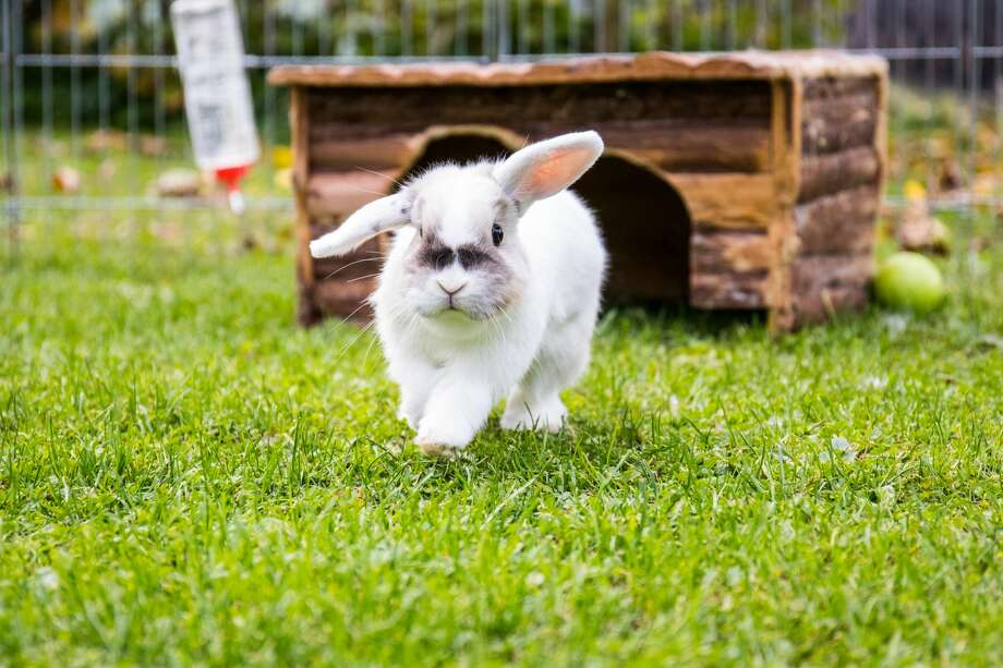 bunny rabbit Photo: Clemens Peters / EyeEm/Getty Images/EyeEm