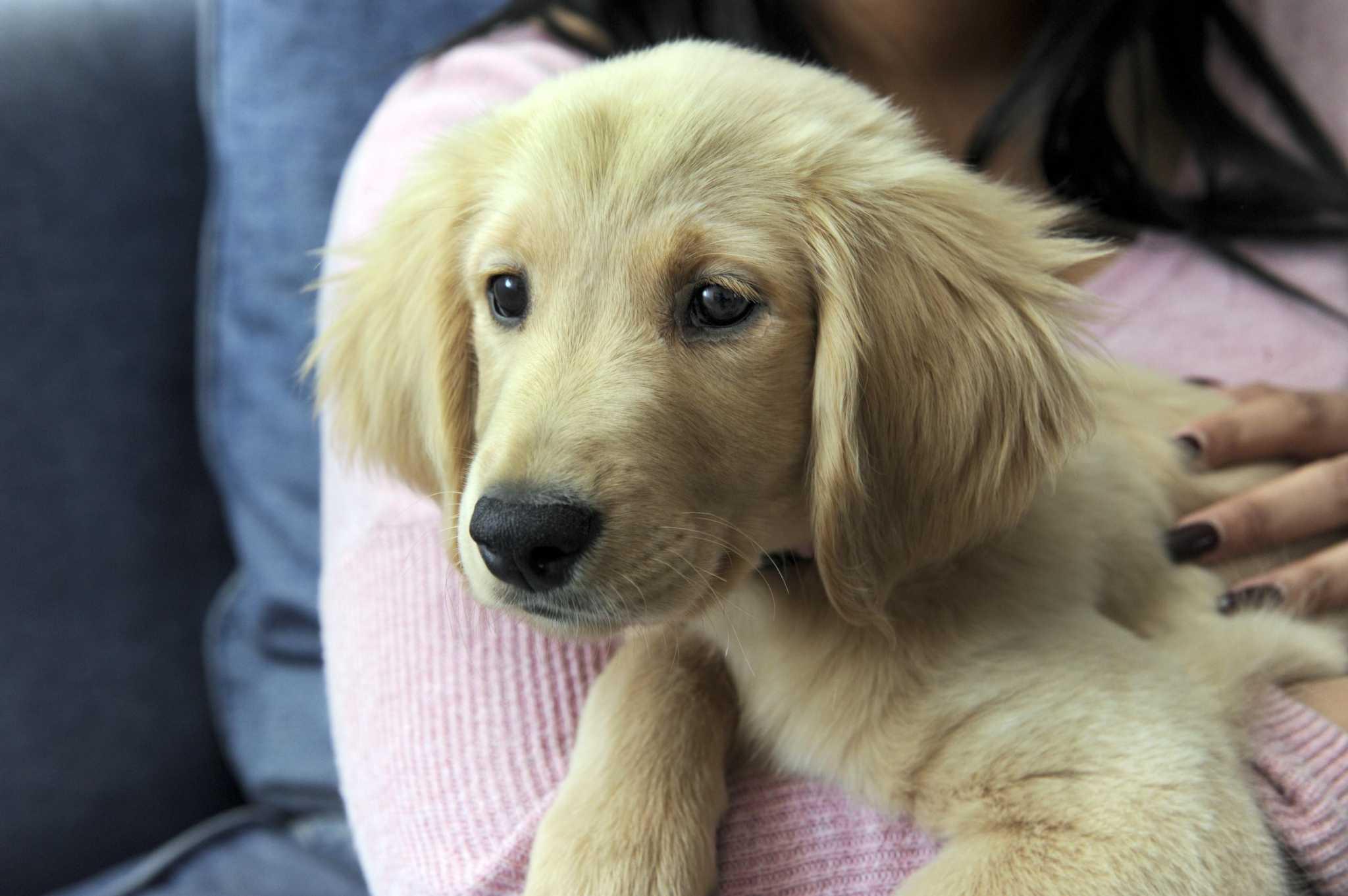 Wonderbaar Danbury police: Puppy Kisses employees sold dogs under 'false SI-33