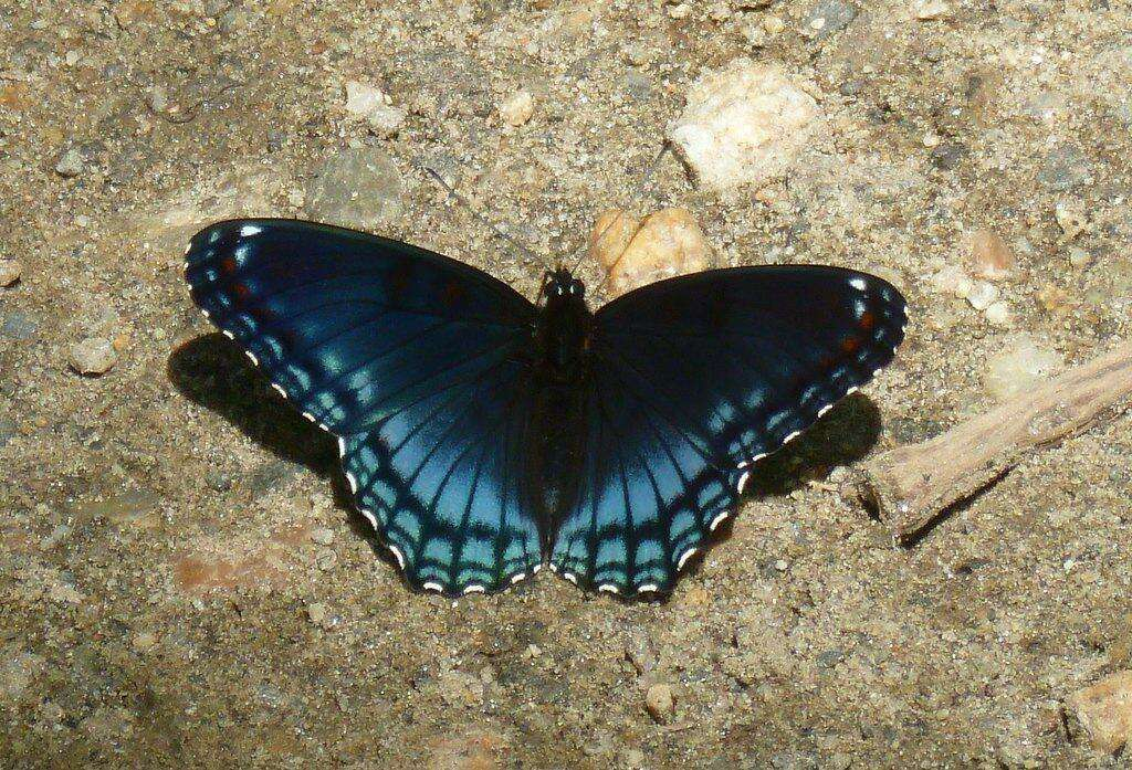 <p>The Butterflies of Salt Meadow,a free nature walk, will be held Saturday August 10, 10 a.m.-noon (rain date August 11)</p>