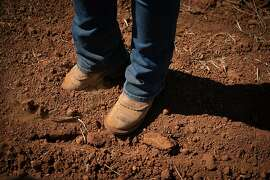 Brenae Royal digs her boot into volcanic clay loam soil at Monte Rosso Vineyard in Sonoma, Calif., on Thursday, July 25, 2019.