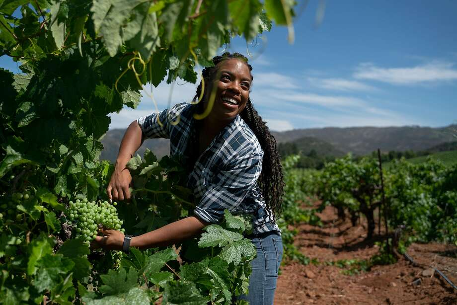 Vineyard manager Brenae Royal, 29, holds a cluster of grapes from a 133-year-old SŽmillion vine at Monte Rosso Vineyard in Sonoma, Calif., on Thursday, July 25, 2019. Photo: Sarahbeth Maney / Special To The Chronicle