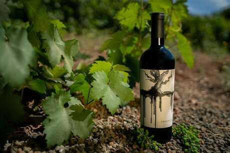 A bottle of Mount Peak Gravity Red Blend, another Gallo wine brand, among the vines that produced it. Photo: Sarahbeth Maney / Special To The Chronicle