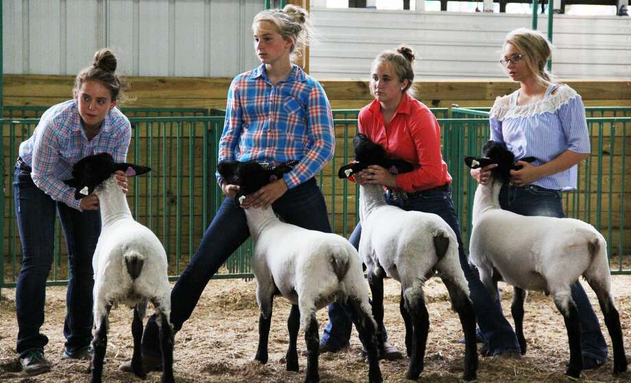The Huron Community Fair continued with horse, rabbit and sheep judging. Allison Holdwick was also crowned the 2019 Huron County Bean Queen. Photo: Andrew Mullin/Huron Daily Tribune