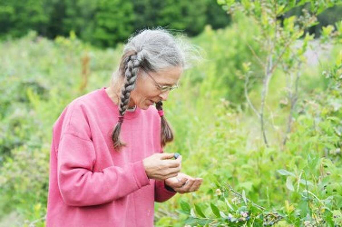 Sandee Ware examines blueberries from her one acre of bushes.