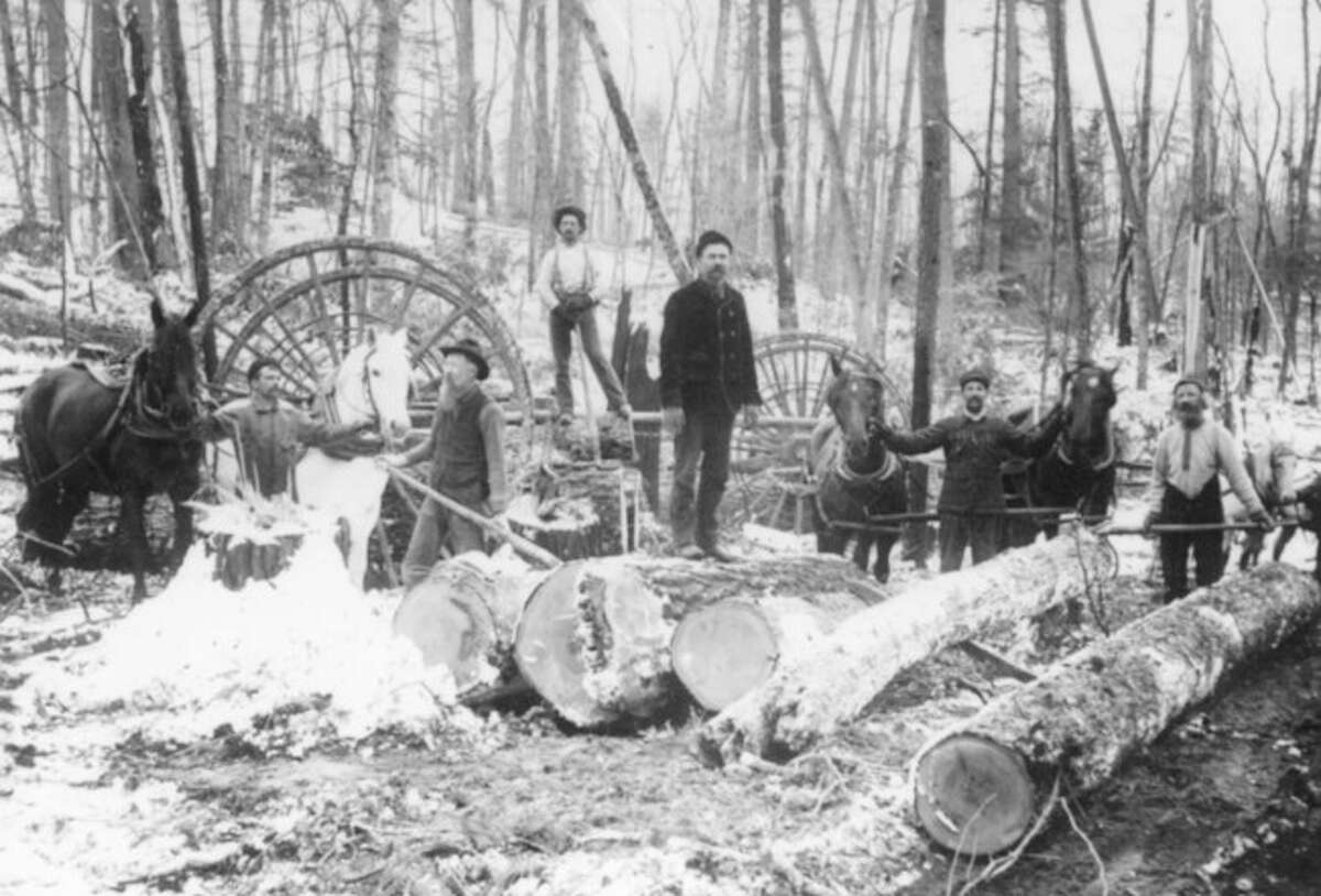 A lumber crew works in the Manistee National Forest in this late 1880s photograph.