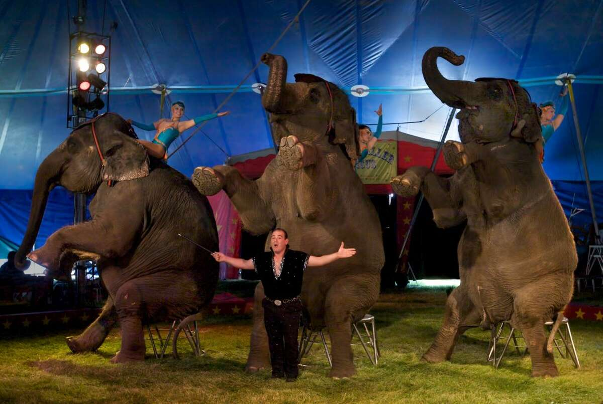 In addition to performing in the shows at 4:30 and 7:30 p.m. Wednesday, the Kelly Miller Circus elephants will also be used to help set up the 1,100 seat big top tent at 9 a.m. Wednesday morning. (Courtesy Photo)
