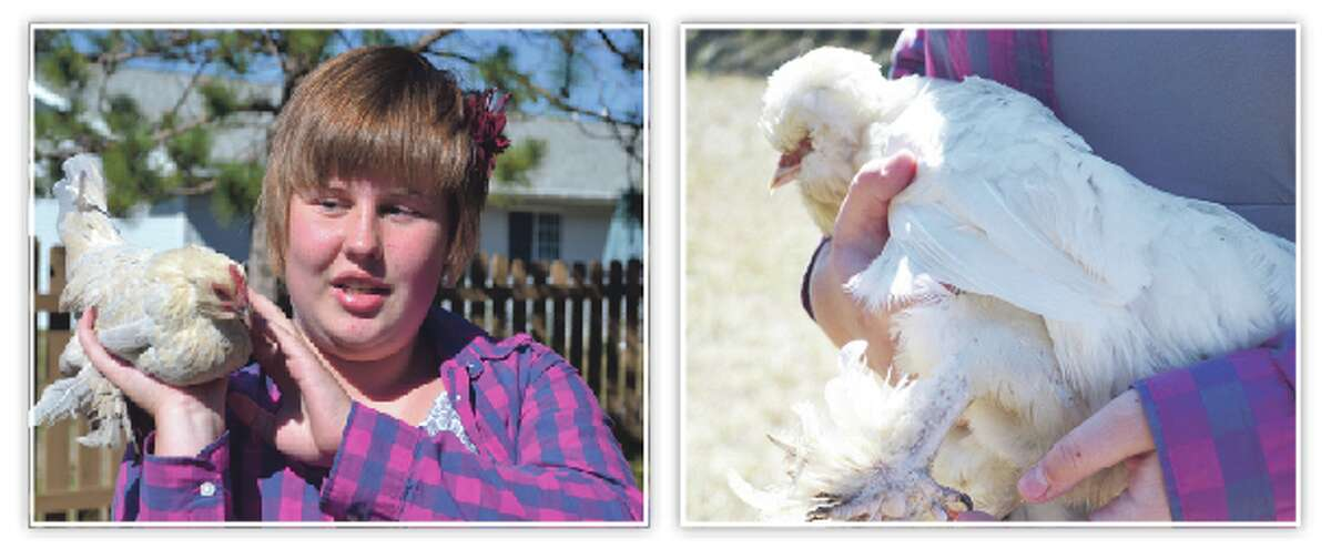 SHOWING OFF: (LEFT) Olivia Selbee, a 14-year-old 4-H participant, shows off one of the nine birds she raises in her Manistee backyard. (RIGHT) Selbee's ornamental birds, which she raises for 4-H, have fancy plumage, including feathered feet. (Photos/Meg LeDuc/News Advocate)