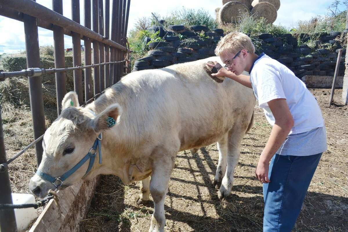 WORKING HARD: James Schoedel, 15, has mixed feelings about participating in 4-H. He enjoys being around the animals, but the program also adds to his workload. (Meg LeDuc/News Advocate)
