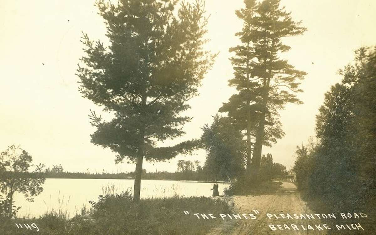 This 1930s photograph shows the tall pine trees located along Pleasanton Road in Bear Lake.