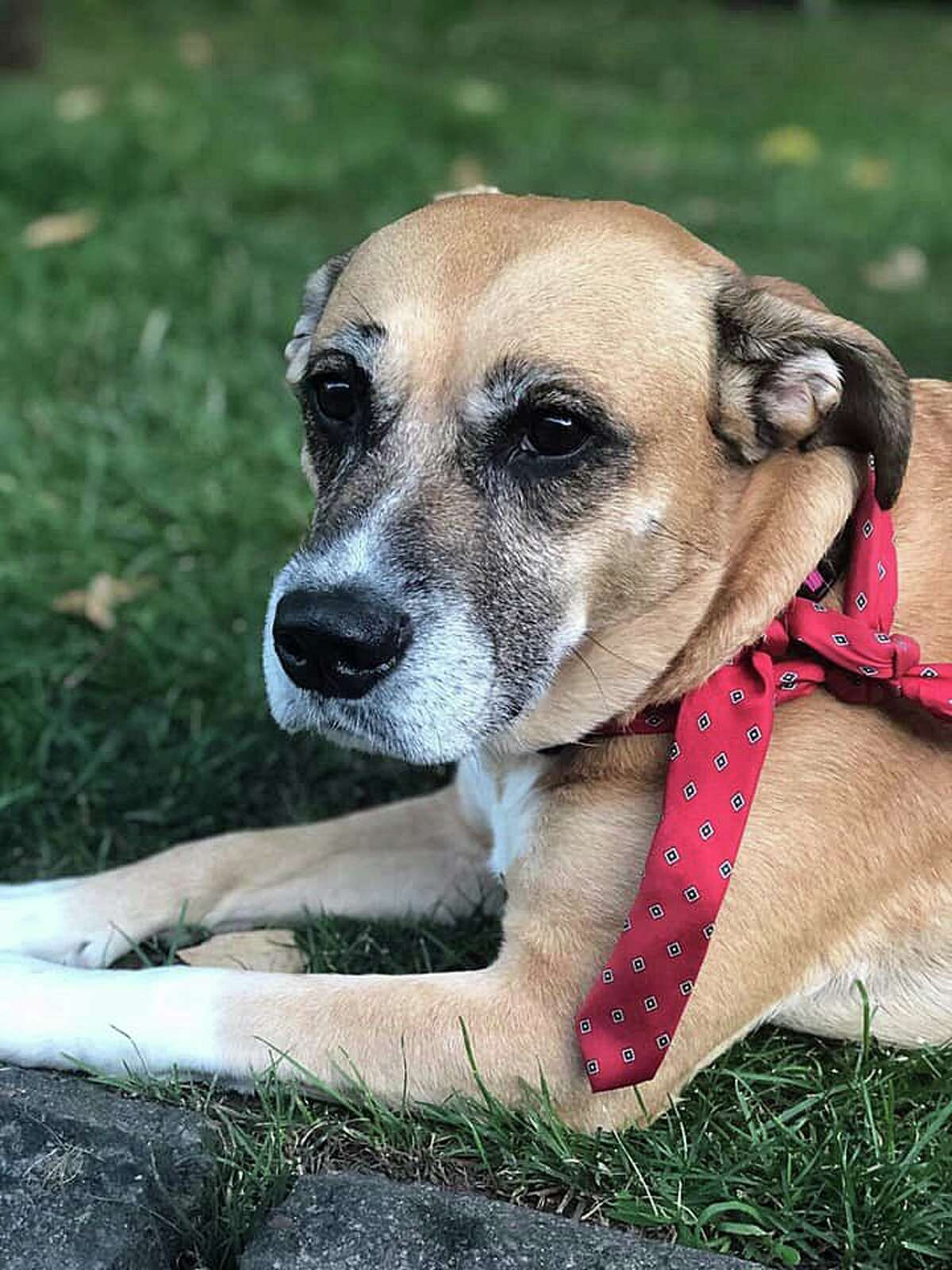 West Haven Animal Control said a dog was found tied to a pole - with a necktie - at an apartment complex on Campbell Avenue on Saturday, July 27, 2019.