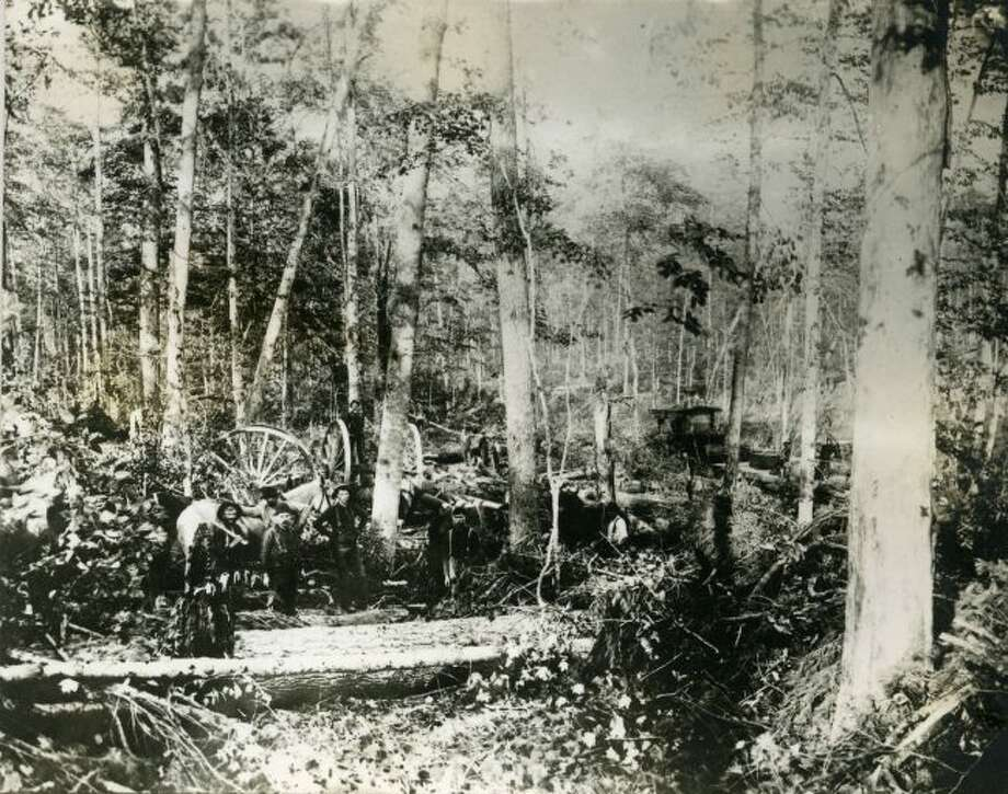 A logging crew working in the forest in the 1890s in shown in this photograph.