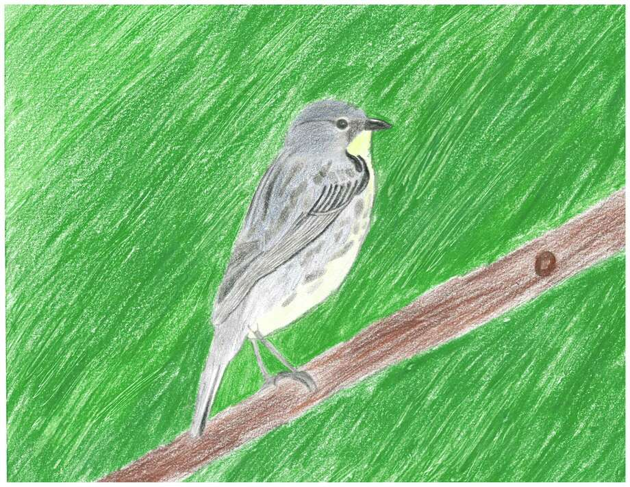 Tristen Page's drawing of a Kirtland's Warbler was the winner for the 2018 contest. (Courtesy Photo)