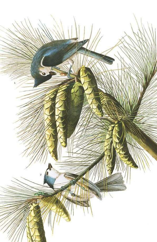 Audubon Exhibit: His Supporters & Predecessors runs Aug. 3 through Sept. 29 at the Ridgefield Library, 472 Main Street, Ridgefield. For more information, visit ridgefieldlibrary.org. Photo: Ridgefield Library / Contributed Photo