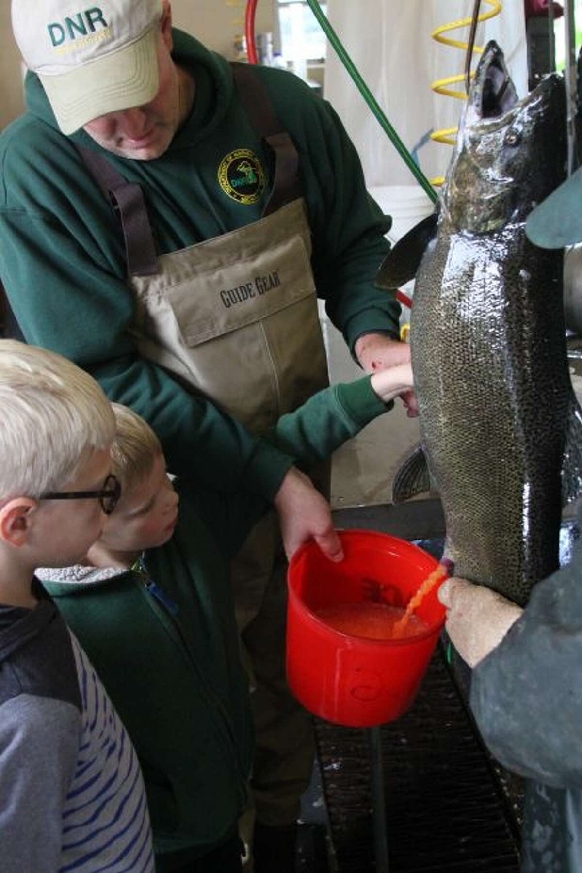 The opportunity for students to see how fish eggs are harvested from weirs will present itself in upcoming weeks at the Little Manistee Weir.