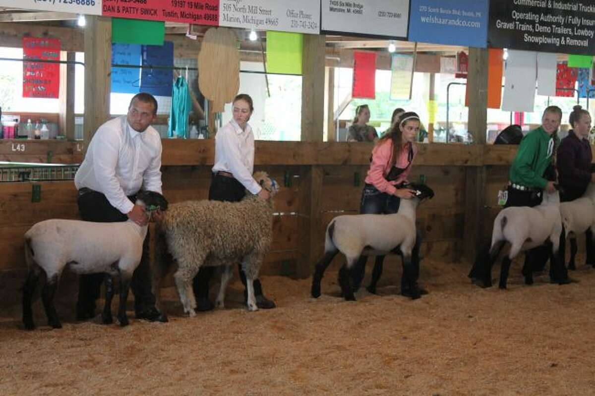 The judging arena was filled with sheep, pigs, cattle and goats on Tuesday as 4-H kids paraded out their best animals before the judges.