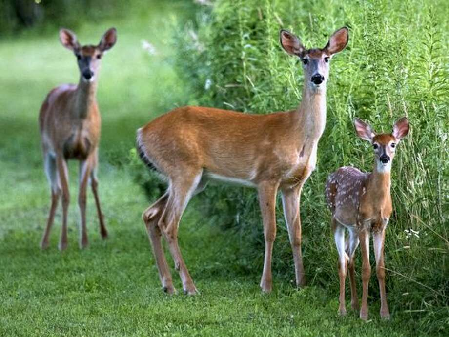 Fall is always the season when the deer population begins to get very active prompting many car-deer accidents. Manistee County say a decline in the number of those accidents last year and law officials hope the trend continues this year.
