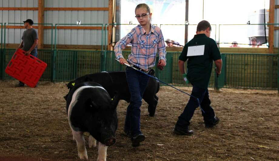The Huron Community Fair continues with swine and dairy show judging. The midway opened this day too, and a drag race was held in the evening. Photo: Andrew Mullin/Huron Daily Tribune