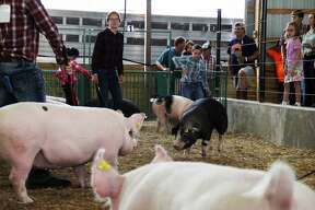 The Huron Community Fair continues with swine and dairy show judging. The midway opened this day too, and a drag race was held in the evening.