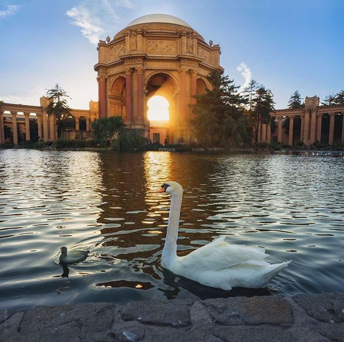 Golden hour with the Palace of Fine Art's lagoon residents by @myfrisco.