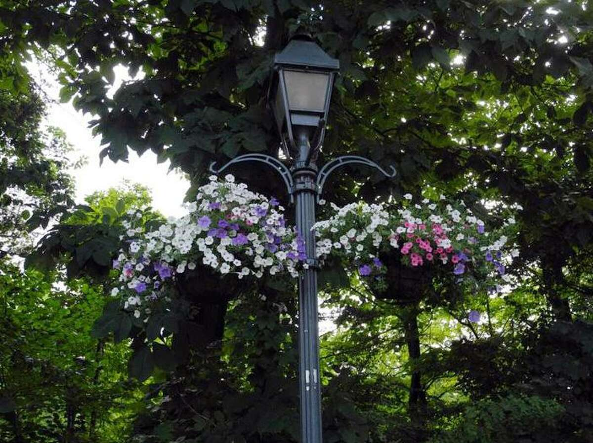The flower baskets hanging from the lampposts in Wilton Center were placed there by the Wilton Garden Club and are cared for by town employees.