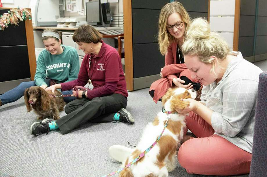 Volunteering your pet to be a part of pet therapy is a great way to spend more time with your pet while improving the lives of people in the community. Photo: Texas A&M University