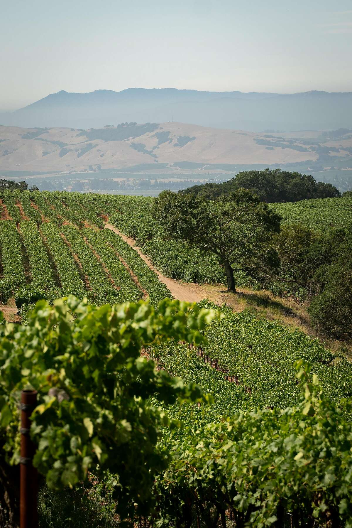 A view of the Sonoma Valley is seen from the top of Monte Rosso Vineyard in Sonoma, Calif., on Thursday, July 25, 2019.