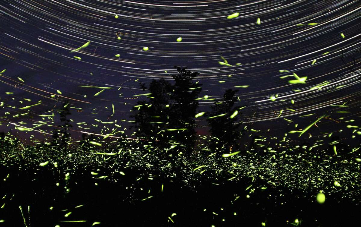 In this one-hour exposure photo by Steve Irvine, fireflies fly in front of his home in Big Bay, Ontario in Canada.