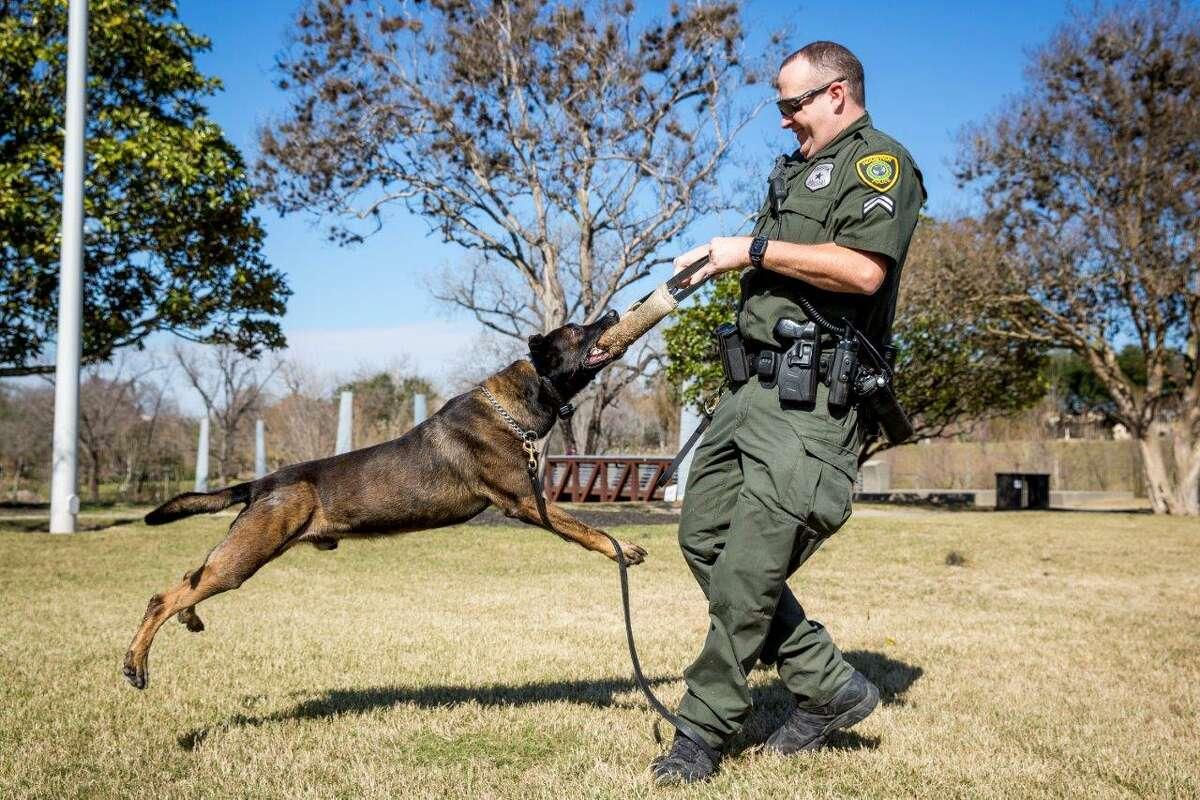 HPD K9Dexter is seen here playing with his handler,Officer Matt Barnett.