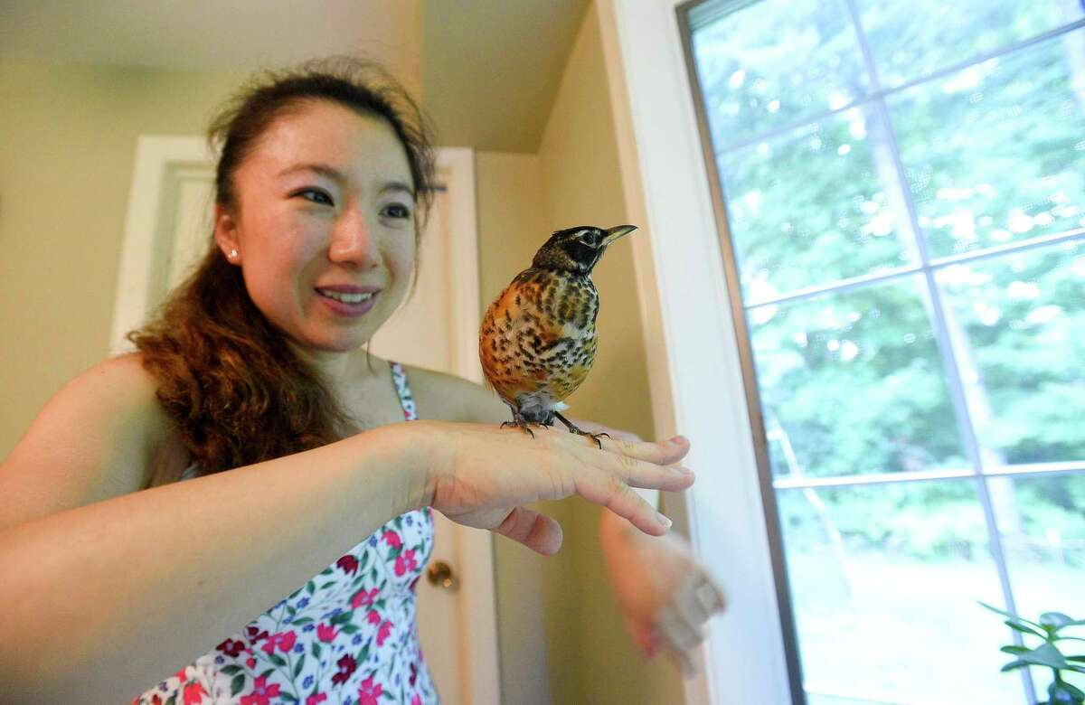 """Nicole Wang of Stamford is photograph on July 30, 2019 with Ali, an injured baby robin she found in the street three months ago near her home in Stamford, Connecticut When she approached, it opened its mouth for food. She took the wild bird home, gave it a name """"Ali"""" and has been nursing it back to health. Ali has never left. It sits on her shoulder when she's watching TV, goes shopping with her and attends her piano concerts."""