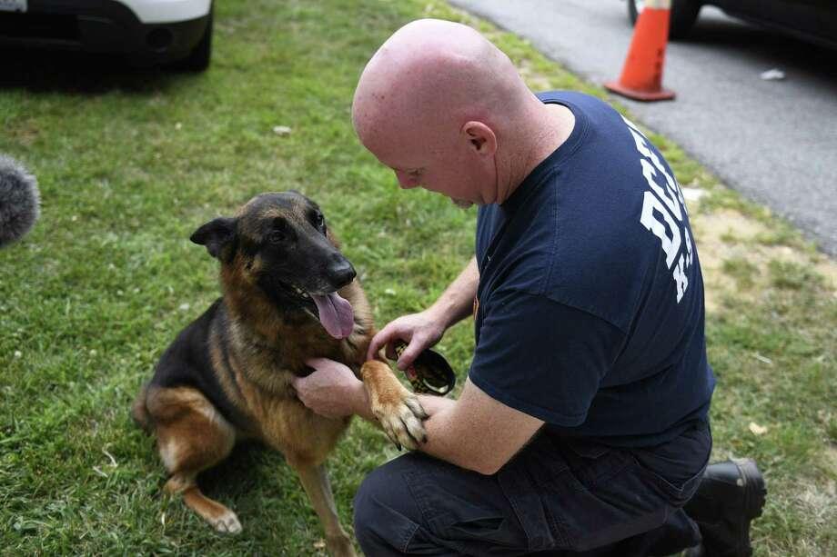 D C Cadaver Dog Impaled On The Job Last Month Returns To Work
