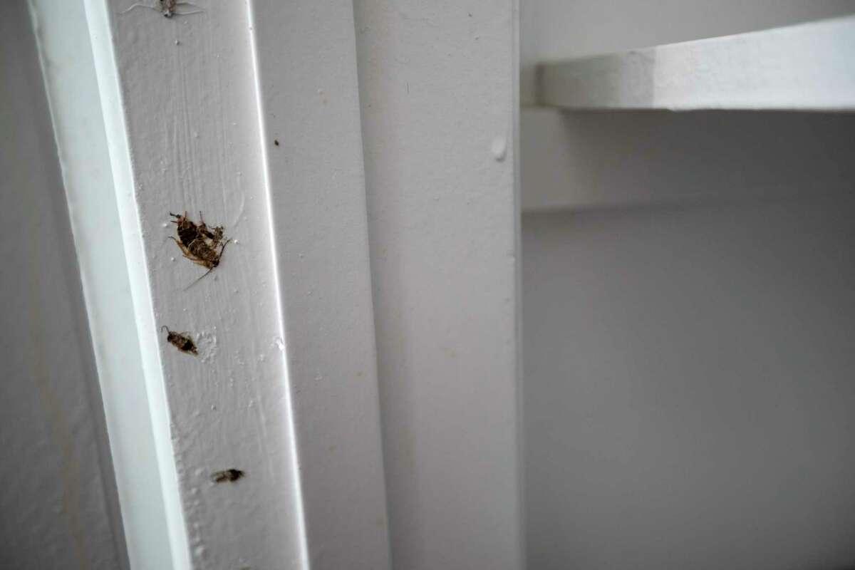 Flattened roaches are painted into the doorjamb of Tanisia Coachman's bathroom closet.