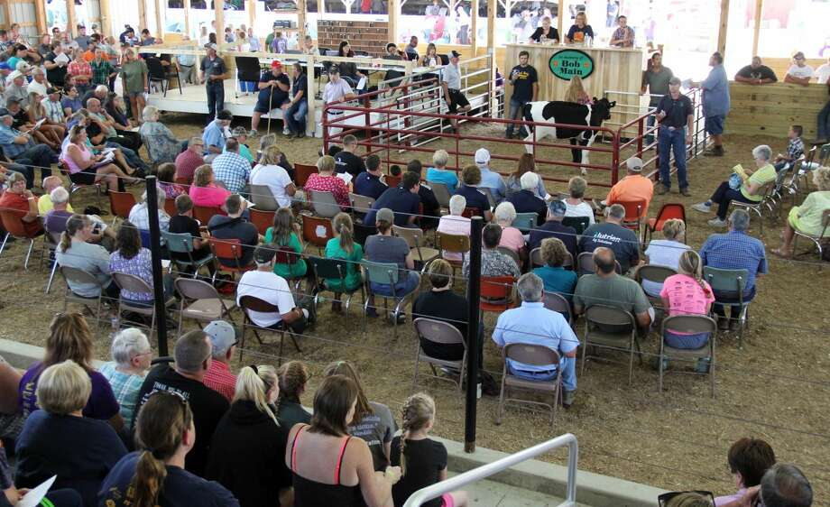 The Huron Community Fair continues with the JLA Auction, featuring sheep, swine, prospect feeders, and market beef. Rayley Jeffers also won the Small Livestock Sweepstakes Contest that night. The day capped off with redneck truck races. Photo: Andrew Mullin/Huron Daily Tribune