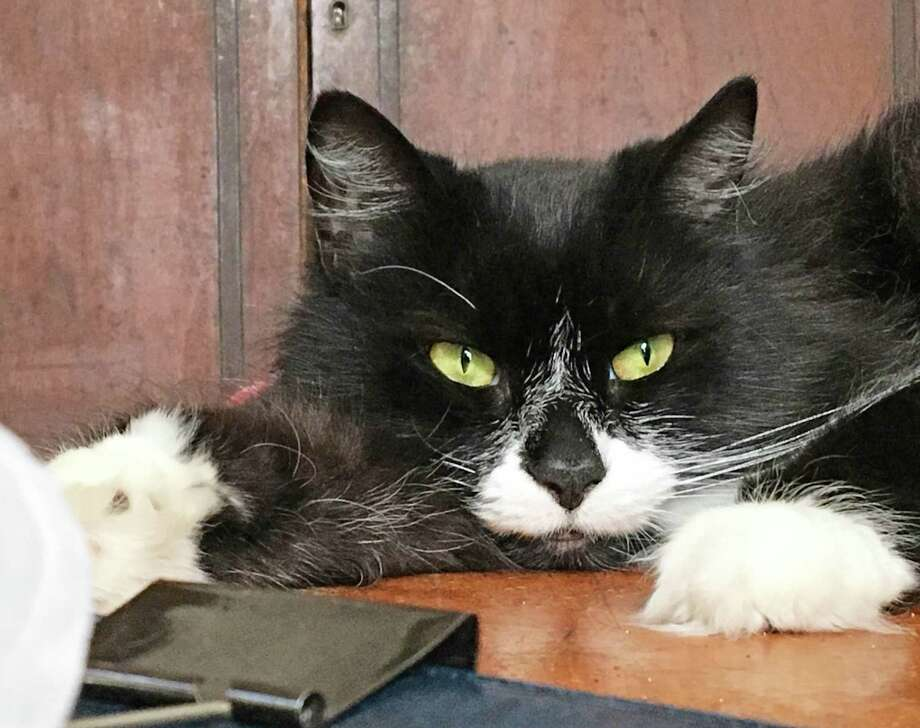 Roughy Dixon Photo: Roughy Dixon, Ken Dixon's Cat /
