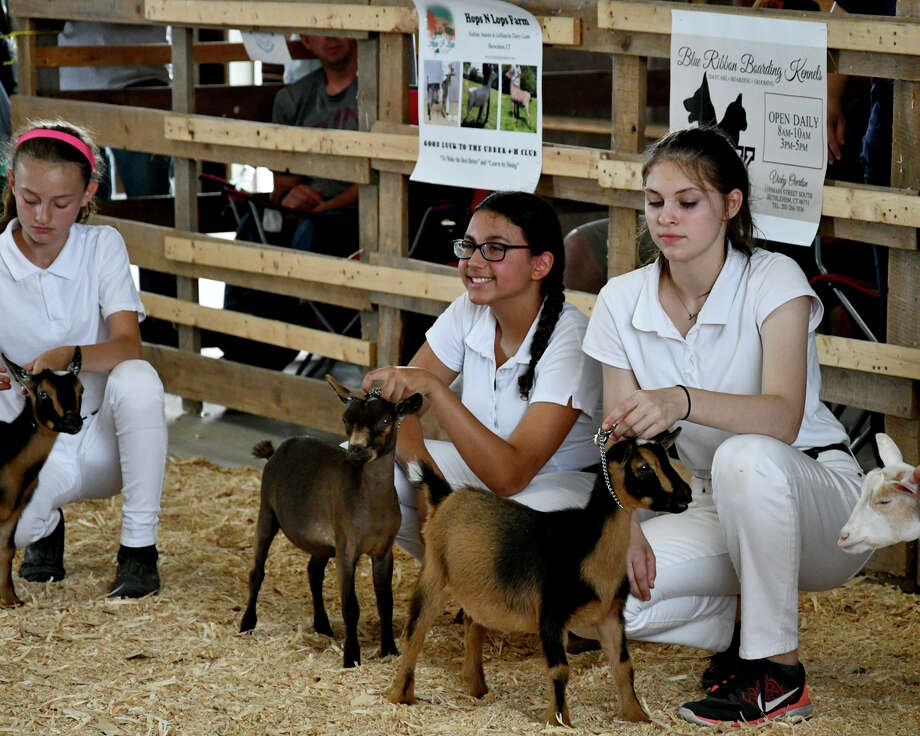 The 2019 Litchfield County 4H held their annual fair at Goshen Fairgrounds on August 3 and 4. Awards were given for showmanship, obedience, and skills. Lots of animals were shown by proud youngsters. Robotics. art, sewing and other items were on display. Photo: Lara Green- Kazlauskas/ Hearst Media
