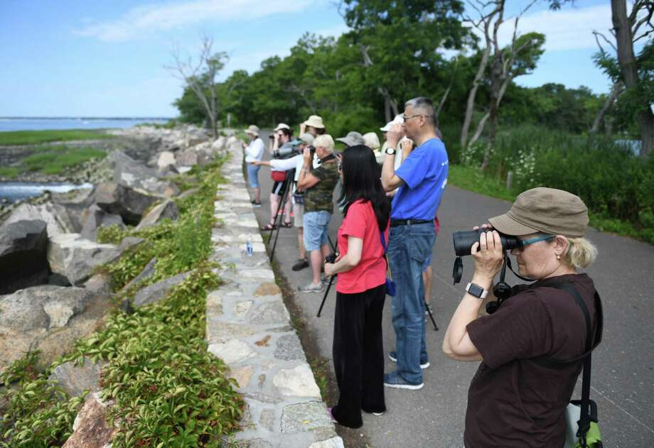 Stamford's Megan Moyer, right, and others observe birds during the First Sunday Bird Walk at Greenwich Point Park in Old Greenwich, Conn. Sunday, Aug. 4, 2019. The walks are a series of free, year-round, monthly bird walks providing friendly and informative birding with knowledgeable local naturalists and birders. Migrating songbirds, shorebirds, flycatchers, hawks and more stop by in spring and fall, a variety of waterfowl feed in the waters of Long Island Sound in the winter, and summer brings breeding birds and waders. Wild Wings and the Friends of Greenwich Point sponsor the event. Photo: Tyler Sizemore / Hearst Connecticut Media / Greenwich Time