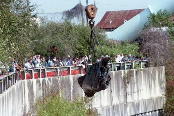 In 1995, a manatee made its way up Buffalo Bayou
