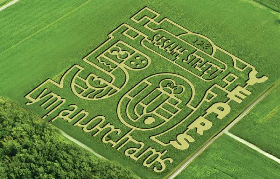 """Lyman Orchards' 350,000 blooming sunflowers are crafted into a design celebrating 50 years of the iconic TV show """"Sesame Street"""" at the corn maze in Middlefield. The event benefits charity, as $1 from every admission supports the Connecticut Children's Pediatric Care Unit. Photo: Contributed Photo"""