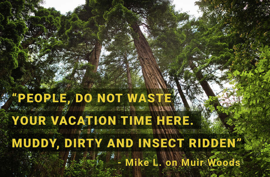 Muir Woods National Monument,  Mill Valley,  California Photo: Photo Illustration: SFGate / Getty Images / jmsilva
