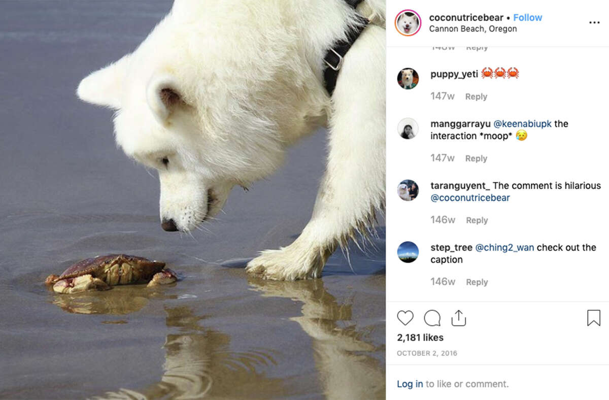Coconut Rice Bear, an Insta-famous San Francisco dog, is on pace to make $80K a year.