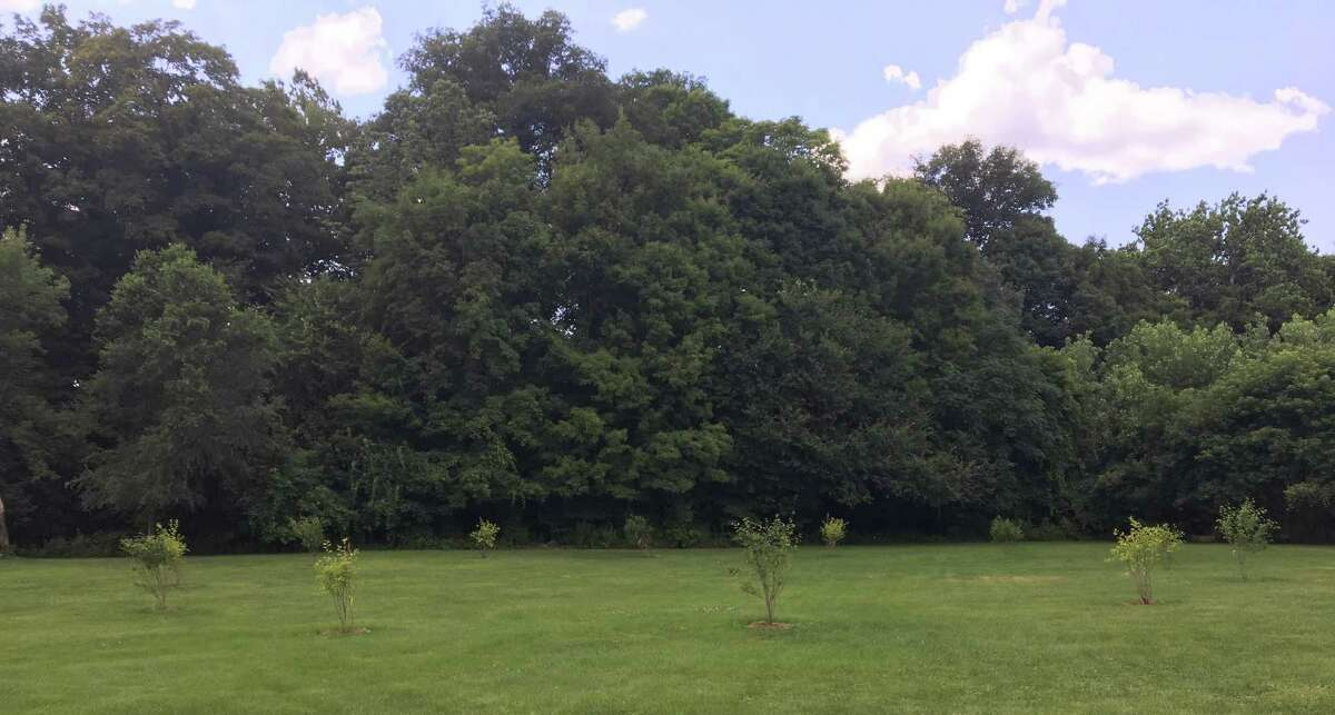 The New Milford Conservation Commission has announced the beautification of Hulton Meadow Park off Mill Street in New Milford. Unique trees were recently planted in the middle of the park.