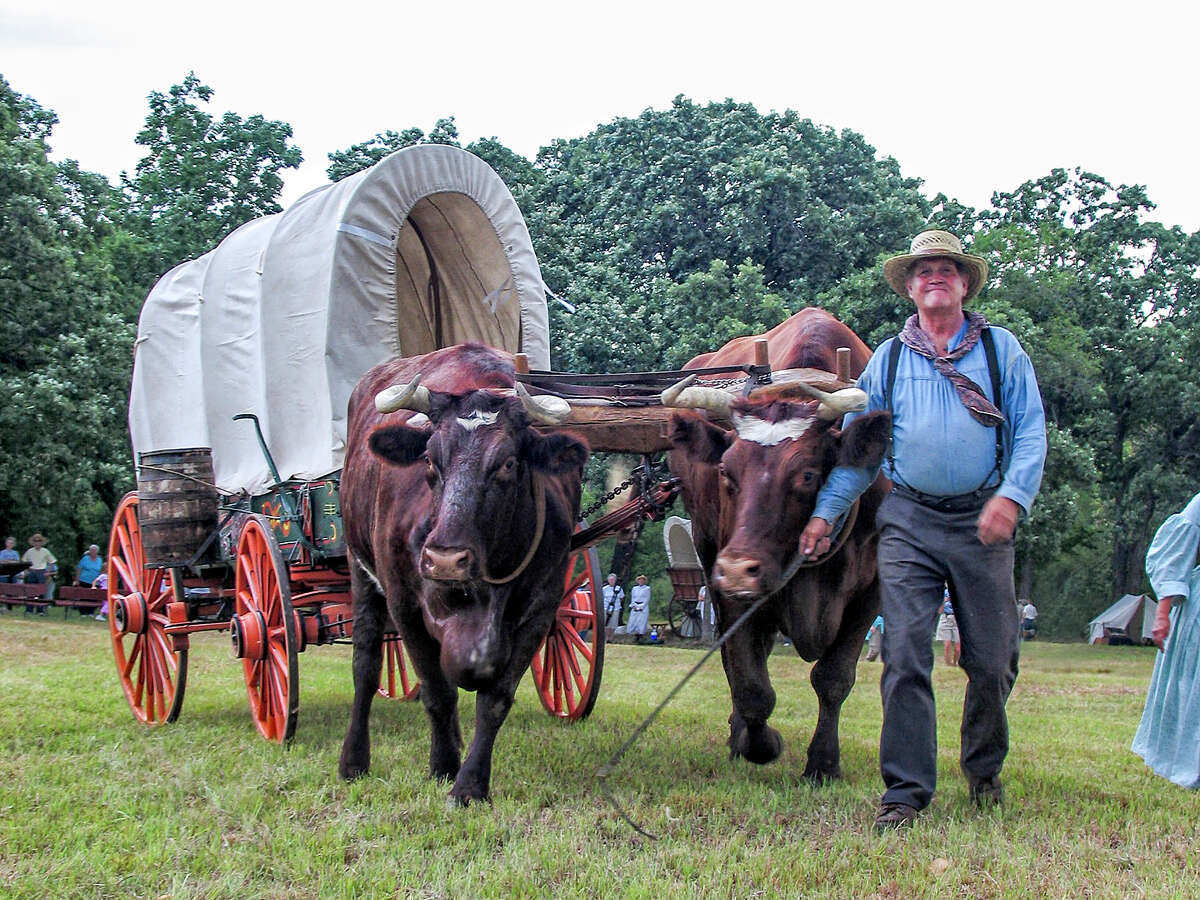Dixon Ford poses with oxen Zeus and Thor during a 2006
