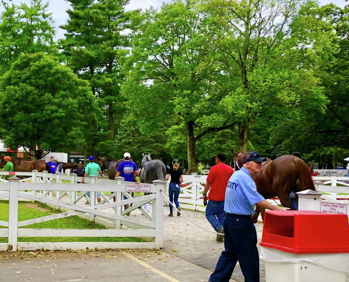 """This is a daily occurrence at Saratoga a€?"""" horses heading down the horse path to the paddock. They are not going to get ready to race. No, they are learning what goes on in the paddock on the days they do come to race. It's called schooling. Horses are led to the paddock and walked around the trees, then put into the paddock stalls and then walked around some more. Most horses do what they are told and get to walk around and enjoy the sights and sounds of Saratoga. (Tim Wilkin / Times Union)"""